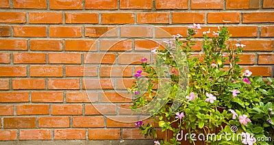 Pot of flower