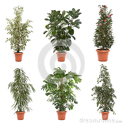 Free Pot Plants Royalty Free Stock Photography - 26419777