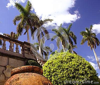 Pot, tree and palms