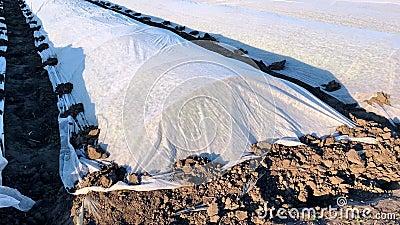 Potatisplantationsfält täckt med agrofiberssprit och plasthinnor för att skydda mot låga temperaturer stock video