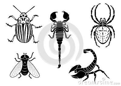 Potato beetle, fly, scorpion and spider