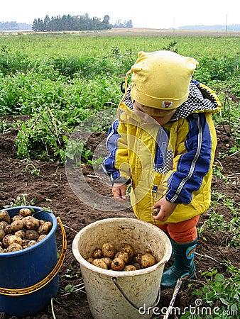 Potato-digger