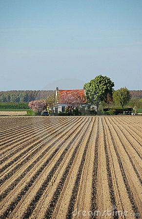 Free Potato Farmland Spring House Royalty Free Stock Image - 6996266