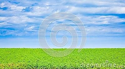 Potato field in PEI