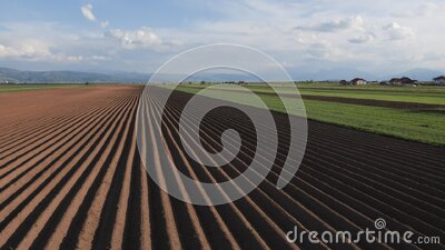 Potato field in spring after sowing stock video