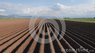 Potato field in spring after sowing - camera rise and reveal the furrows stock video footage