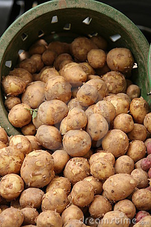 Potatoes in basket at farmer s market