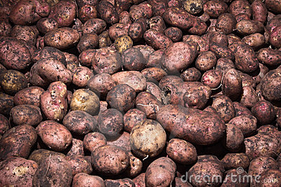 Potatoes raw vegetables food pattern