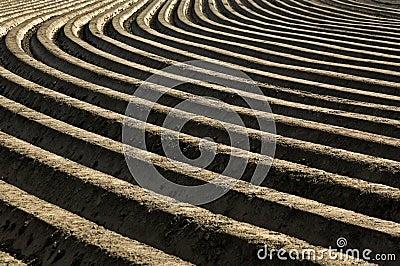 Potatoes ridges in a rural landscape, Netherlands