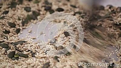 Potiron, tournesol et graine de sésame grillant dans la casserole chaude, fin ; banque de vidéos