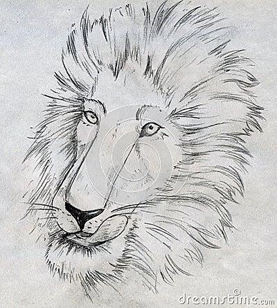 De schets van de leeuw