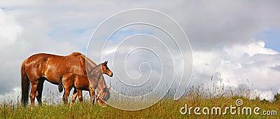 Potro e égua