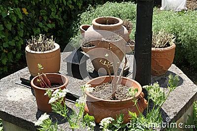 Pots of cold-sensitive plants