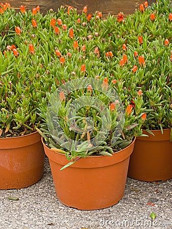 Pots in patio