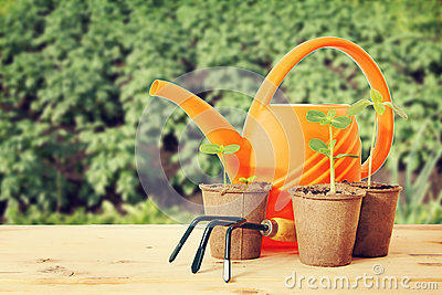 Pots with seedlings and watering can Stock Photo