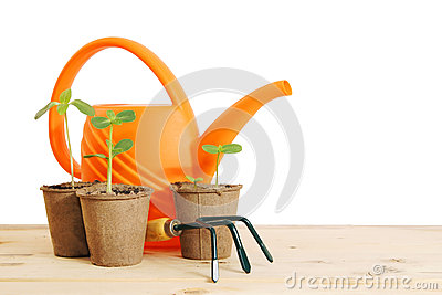 Pots with seedlings and watering can isolated over white Stock Photo
