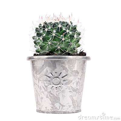 Potted Cactus Stock Photography - Image: 12125792
