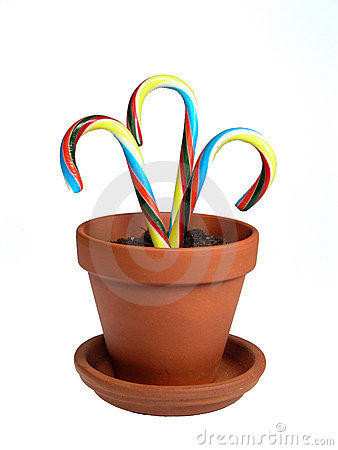 Free Potted Canes Stock Photography - 327872