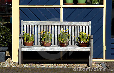 Potted Daffodils