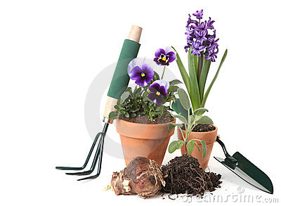 Potted New Plantings Celebrating Springtime Garden