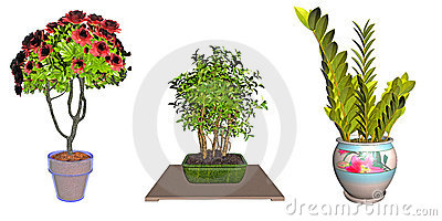 Potted plant illustrations