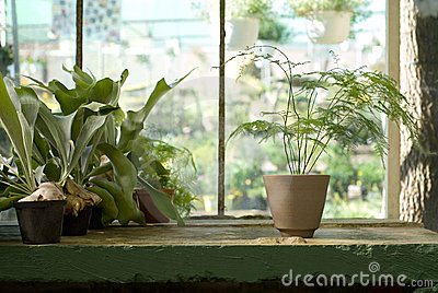 Potted Plants on Table in Greenhouse