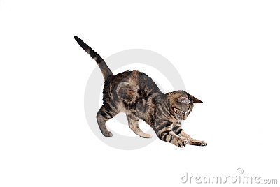 Pouncing Kitten