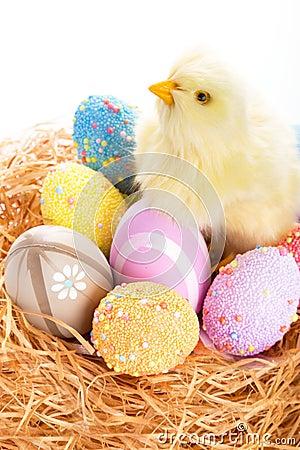 Oeufs et poussin de pâques dans le nid