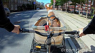 POV所有者骑狗或骑自行车篮 股票视频