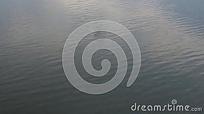 POV: Скакать в озеро сток-видео