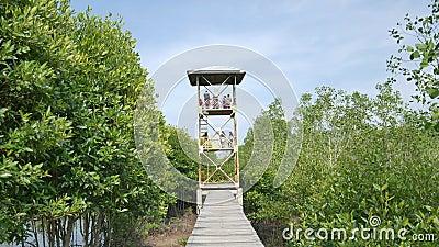 Povos que olham manguezais Forest From Above a torre nos manguezais Forest Conservation Lubuk Kertang filme
