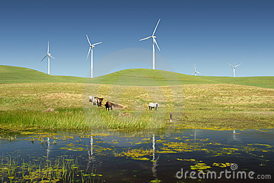 Power Generating Windmills And Livestock Royalty Free Stock Images ...