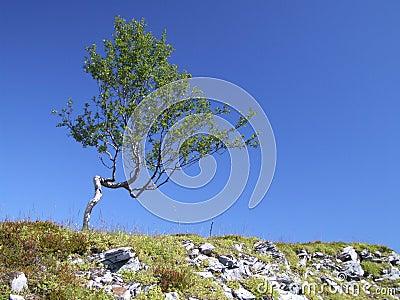 Power of nature - endurance