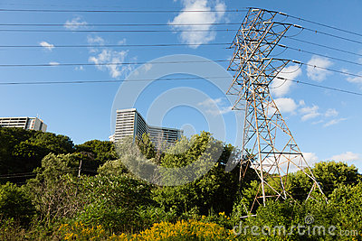 Powerlines in a Park