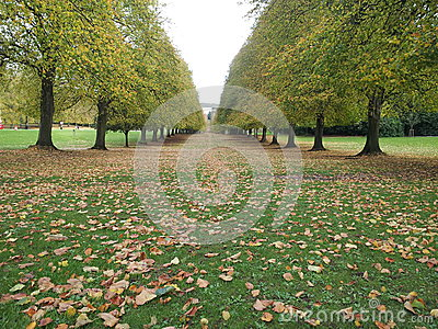 Ppark in autumn