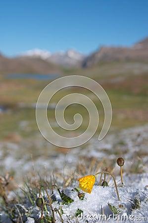 Pré de montagne pendant le matin après la chute de neige importante 2