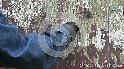 Pracownik przeznaczać do rozbiórki starą krakingową farbę od drewnianego drzwi zdjęcie wideo