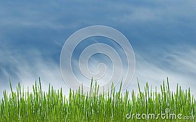 Prado da grama verde e do azul céu cloudly