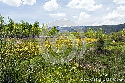 Prado de Wildflowers amarelos