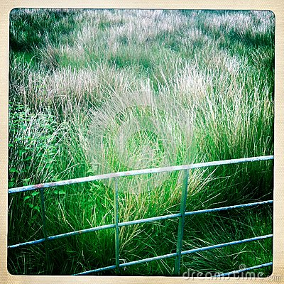 Prado verde detrás de la cerca