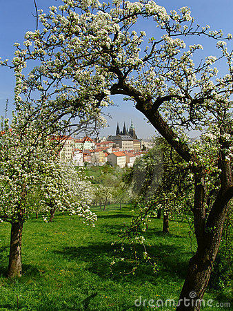 Prague gothic Castle with flowering trees