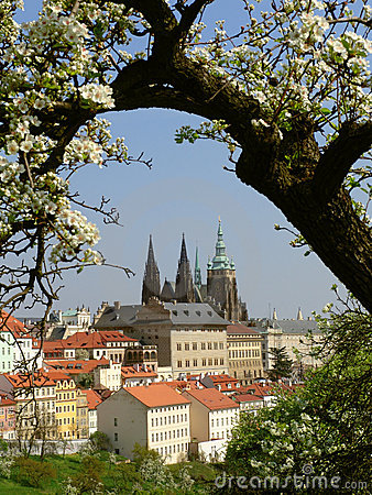 Prague gothic Castle with flowering trees and gras
