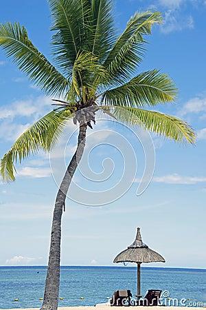 Praia branca tropical da areia com árvores de coco,