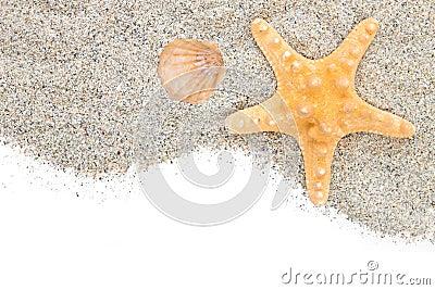 Praia com starfish e escudo da areia