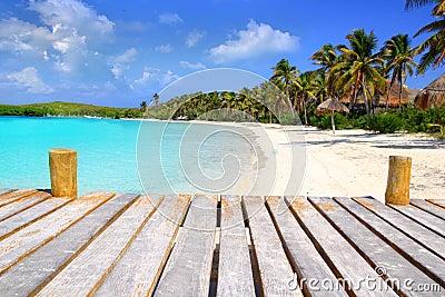 Praia do Cararibe México do treesl da palma do console de Contoy
