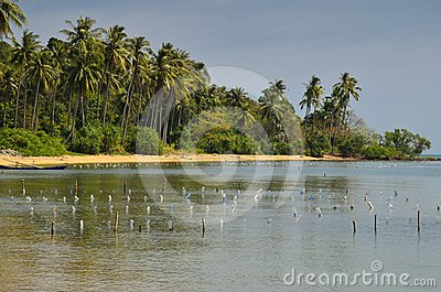 Praia do paraíso da palmeira no console do coelho