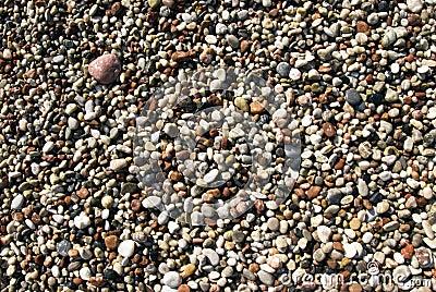 Praia molhada dos seixos