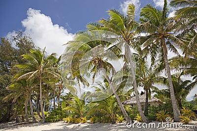 Praia tropical com palmeiras e cabana