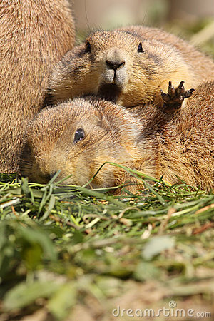 Prairie dog wanting some privacy
