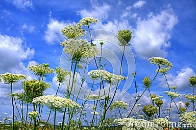Prairie flowers against blue sky